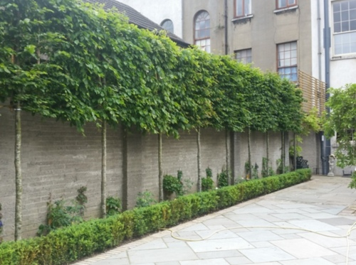Tully Landscapes - winner Private Gardens over €30,000